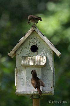 Occupied  http://socialaffiliate.wix.com/bird-houses http://buildbirdhouses.blogspot.ca/