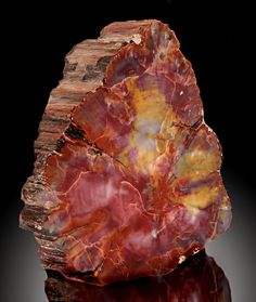 Rainbow Petrified Wood - Arizona