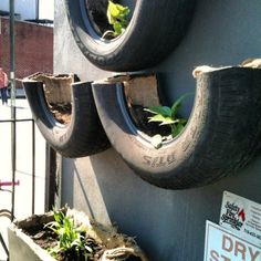 tire planters a growing