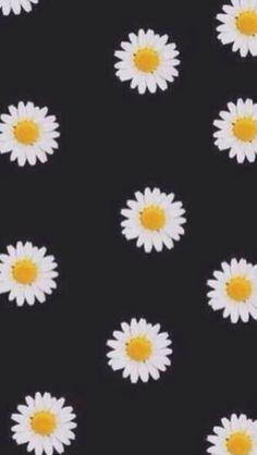 ♡I love my daisies