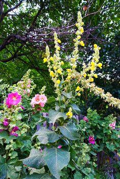 Calander, Flower Art, Flowers, Plants, Art Floral, Plant, Royal Icing Flowers, Flower, Florals