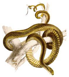 90ed5bde.gif (358×400) Snake Gif, Animals, Animais, Animales, Animaux, Animal