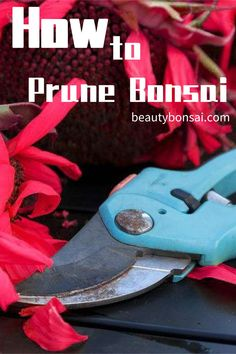 Bonsai policies - When you cut bonsai branches, there are some things you need to recognize and also they are really important bonsai policies Bonsai Tree Care, Indoor Bonsai Tree, Indoor Trees, Bonsai Trees, Pruning Plants, Bonsai Pruning, Tree Pruning, Conifer Trees, Deciduous Trees
