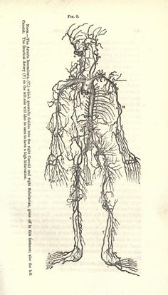 A text book of anatomy, and guide in dissections, - Biodiversity Heritage Library