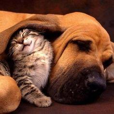#pet #pets #meupet #fotosdepets / Fotos e Dicas para cuidar do seu PET => / #petfotos #filhotes… #pet #pets #meupet #fotosdepets #petfotos