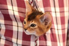 Presents, Kitty, Instagram, Cats, Animals, Gatos, Animais, Gifts, Animales
