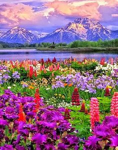 Wildflower Heaven, Grand Teton NP, WY