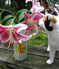 #Spring is finally here! For National #Pet Poison Prevention Week, our #Caturday post is about indoor plants that are NOT pet friendly.