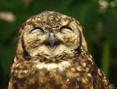 ふくろうさん(Owl)
