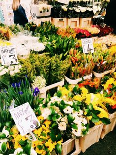Columbia Road Flower Market — Modest London