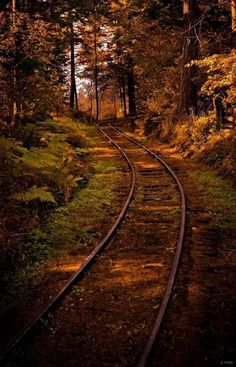 "Fall travel on Vancouver Island: ""Dappled Sun on the Forest Railway - A winding railroad through the forests of the British Columbia Forestry Discovery Museum. Train Tracks, Belle Photo, British Columbia, Beautiful Landscapes, Railroad Tracks, Abandoned, Nature Photography, Beautiful Places, Beautiful Pictures"