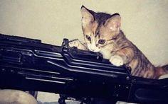Isis: stermineremo i gatti. Ma, quello che c'è dietro è... Non si può mai dire. Da persone folli quali sono i terroristi del Daesh (ISIS), ci si può davvero aspettare di tutto: fanno sgozzare i prigionieri anche dai bambini, figurarsi se non possono spenders #isis #gatti #bufale