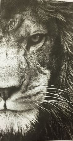 Lion Wallpaper Iphone 7 is the best high definition iPhone wallpaper in You can make this wallpaper for your iPhone X. Lion Wallpaper Iphone, Animal Wallpaper, Mobile Wallpaper, Lion And Lioness, Lion Of Judah, Amazing Animals, Animals Beautiful, Black And White Lion, Lion Eyes
