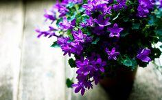 Resultado de imagem para imagem de flores