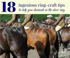 Ring craft is the art of showing your horse off to it's absolute best in the ring - check out 18 ways you can master this for your next show!