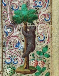 """""""Orso che si arrampica sull'albero"""",miniatura tratta dal 'Libro d'Ore di Simon de Varie' (1455-1460), Koninklijke Bibliotheek, L'Aia."""