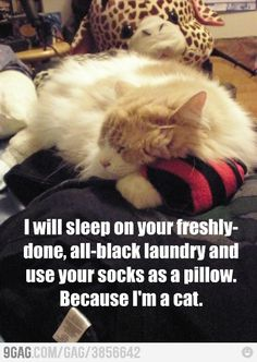 Um.  Yeah.  And our dark furred cats sleep on the light colored clothes.  It's a cat rule or something.