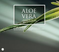 Pure Aloe Vera has been recognized for it's amazing healing and beauty properties since ancient times and is often referred to as the Miracle Plant.