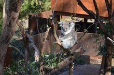 tatyanabinovskatours: Healesville Sanctuary-Святилище Хиелсвиля.