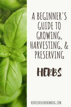 The Beginner's Guide: How to Grow, Harvest, and Preserve Fresh Herbs at Home Gardening For Beginners, Gardening Tips, Balcony Gardening, Indoor Gardening, Growing Herbs, Growing Vegetables, Preserve Fresh Herbs, Types Of Herbs, Garden Tool Storage