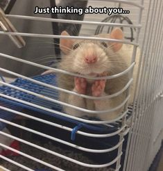 And people say rats can't be cute…