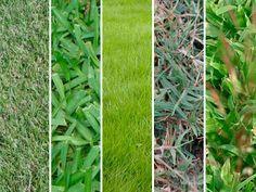 Tipos de grama qual escolher