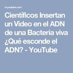 Científicos Insertan un Video en el ADN de una Bacteria viva ¿Qué esconde el ADN? - YouTube