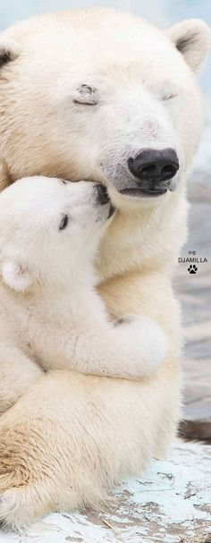 adorable  #polarbears  Visit our page here: