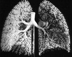 #lungs #respiratory system #anatomy
