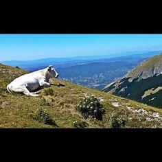"""Monte Catria - """"l'uomo chiese alla montagna di toccare il cielo..."""" #montecatria #igersmarche - @lumachino- #webstagram"""