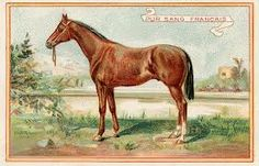 Beautiful Brown Horse, Vintage Graphic