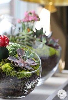 Succulent Garden Bowls // Bookshelf Style