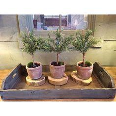 Rosemary twigs {CF Home Furniture & Design} #cfhome #gardnervillage #rosemary #interiordesign #greenery #makehomeyours