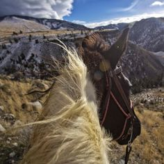 Photo by @dguttenfelder. The mane of a horse blows in the wind on a mountain aside overlooking the northern boundary of Yellowstone National Park. For more photographs of Montana's mountain horseman, and the beauty of the horses they ride in the backcountry of the Gallatin National Forest, please follow me @dguttenfelder. #horses # @natgeo @thephotosociety @natgeocreative