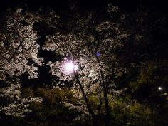 Stream ALONE by Unofficial Renaissance Society from desktop or your mobile device Alone, Stargazing, Renaissance, Seasons, Celestial, Cherry Blossoms, Desktop, Outdoor, Inspiration