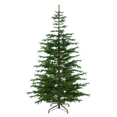 Home Depot Live Christmas Trees Prices