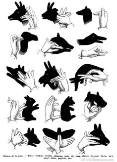 make shadow puppets - Fun to do with the little ones when camping in a tent! My niece and I had fun trying to come up with our own.. Here are some fun ones to try! :)