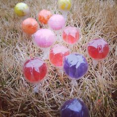 Easter | Magic Jellybeans planted on Easter Eve grow into Lollipops overnight!