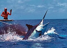 Marlin is one of the world's most popular game fish and the waters around Costa Rica are full of them. Deep Sea Fishing, Gone Fishing, Sport Fishing, Kayak Fishing, Fishing Tackle, Marlin Fishing, Aqua Culture, Monster Fishing, Destin Fishing