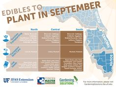 What to plant in September Fall in north, central and south Florida