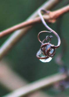 dew drop caught in dried vine