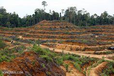 In Indonesiens Leuser Nationalpark wird so viel Regenwald vernichtet wie nie zuvor. Die Heimat von Orang-Utans, Nashörnern, Tigern und Elefanten wird zerstört.  Bitte unterschreiben sie unsere Petition gegen den Plan der Regierung, noch mehr Palmöl-Plantagen zu fördern:  https://www.regenwald.org/aktion/986/muss-mein-wald-fuer-biodiesel-sterben