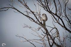 Las primeras horas del día domingo me dispuse a fotografiar aves y salieron algunas ,Verdón tomando calor de los primeras rayos solores - Rodeo Iglesia