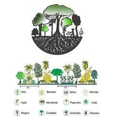 agrofloresta Natural Farming, Curiosity Killed The Cat, Environmental Engineering, Forest Garden, Green Garden, Green Life, Survival Skills, Urban Farming, Agriculture
