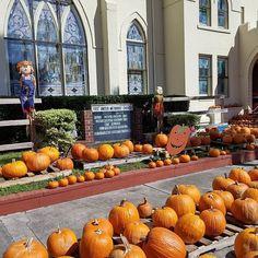 Pumpkin Patch at First United Methodist Church #pumpkinpatch #halloween #fall #pumpkins #october #autumn #jackolantern #costume #spooky #scared #carving #scary #candy #love #haunted #instagood #hauntedhouse #celebrate #pumpkin #ghost #fallishere #staugustine #farm #family #creepy #trick #fallfun #bestoftheday #cute #orange
