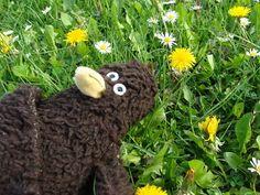 Erwin mag Frühlingswiesen.