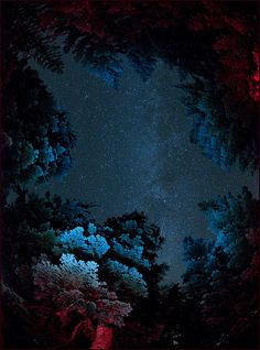 Andromeda and the Milky Way floating among the trees