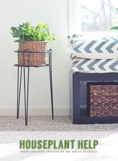 indoor houseplant help: tips and resources for keeping indoor plants alive