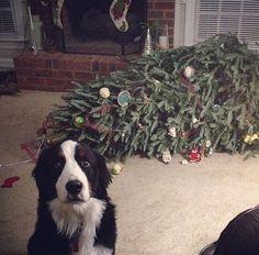 cão e árvore de Natal
