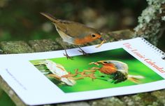 Advertising his own calendar #LouieRobin - He now has his own 2017 calendar, available here http://etsy.me/2eSRHFR